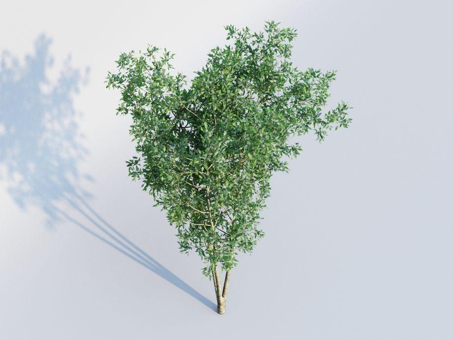 planta arbol royalty-free modelo 3d - Preview no. 3