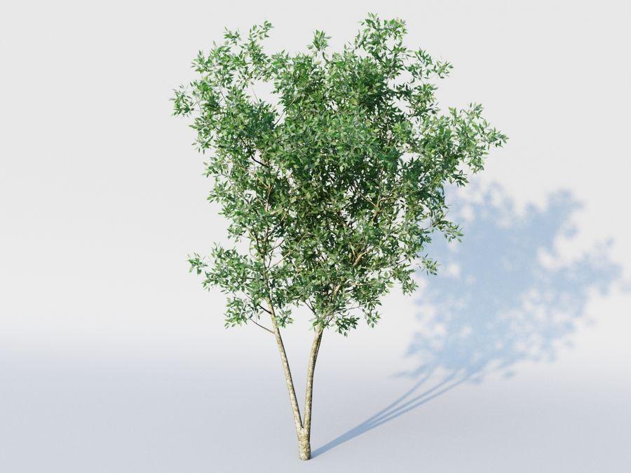 planta arbol royalty-free modelo 3d - Preview no. 2