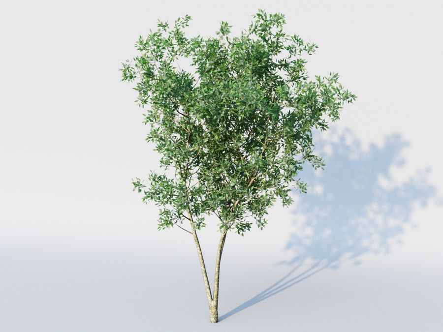 plant tree royalty-free 3d model - Preview no. 2