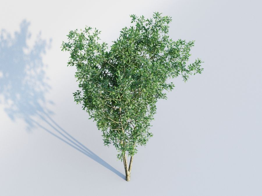 plant tree royalty-free 3d model - Preview no. 3