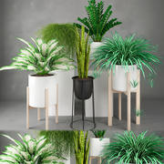 Zimmerpflanze 23 3d model