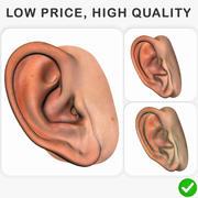 耳 3d model