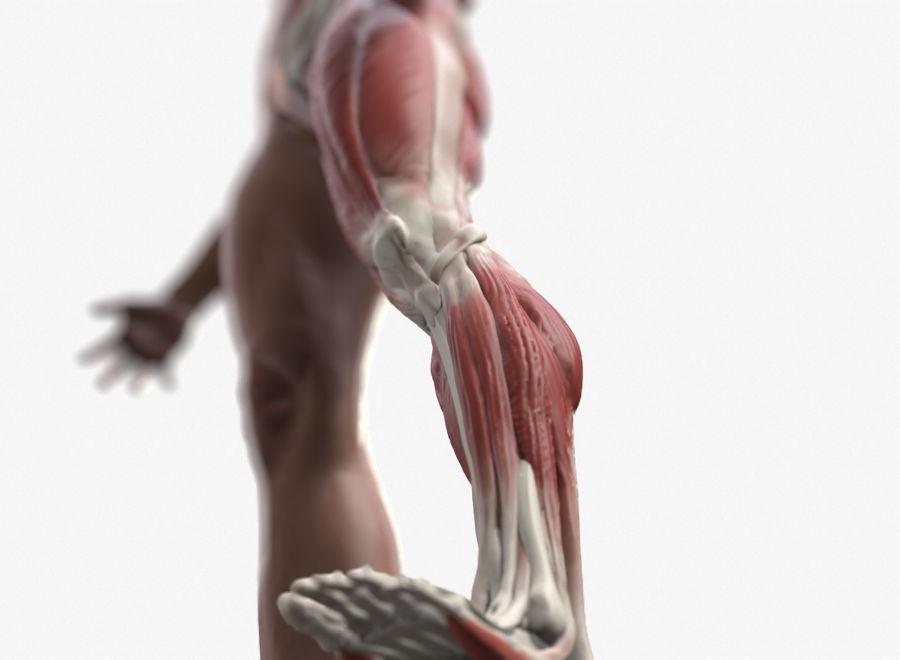 Ecorche:男性の解剖学的参照 royalty-free 3d model - Preview no. 4