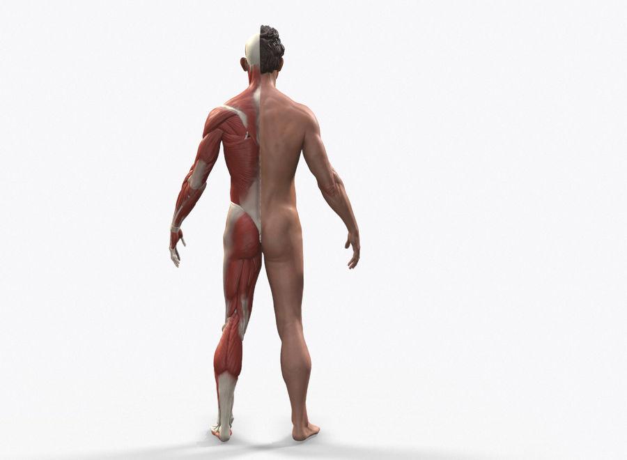Ecorche:男性の解剖学的参照 royalty-free 3d model - Preview no. 2