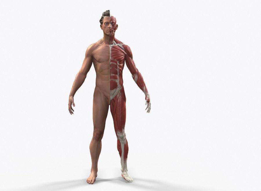 Ecorche:男性の解剖学的参照 royalty-free 3d model - Preview no. 5