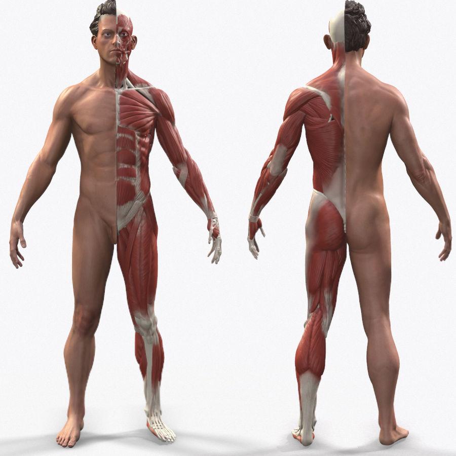 Ecorche:男性の解剖学的参照 royalty-free 3d model - Preview no. 8
