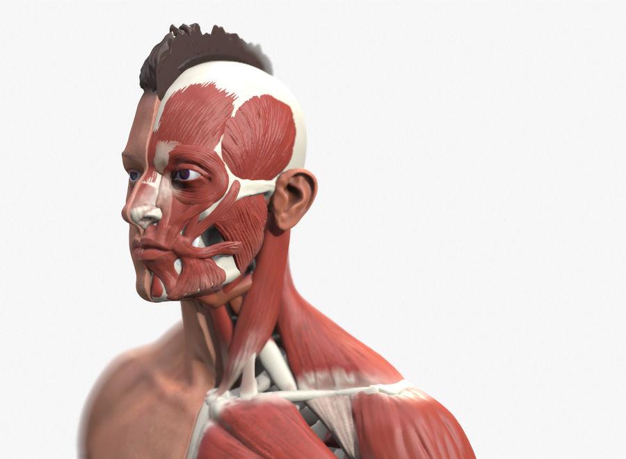 Ecorche:男性の解剖学的参照 royalty-free 3d model - Preview no. 6