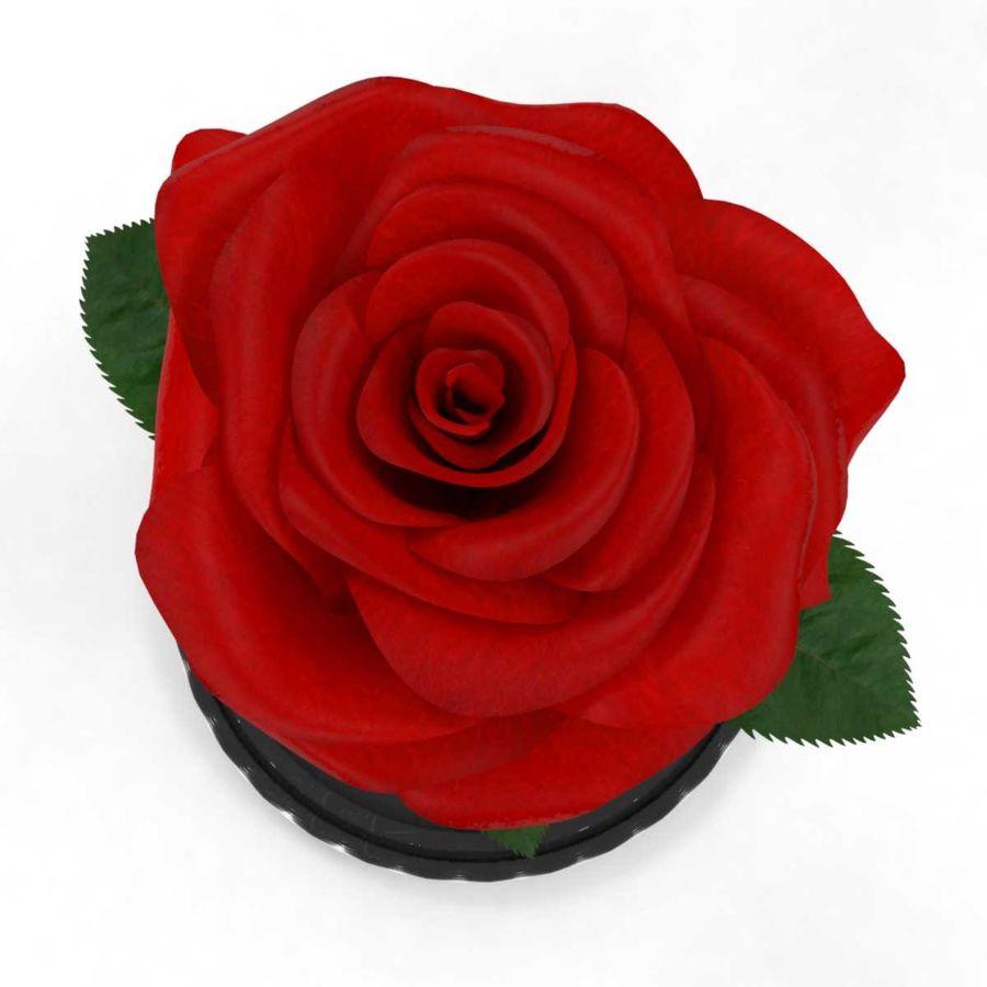 Rode roos in een kolf royalty-free 3d model - Preview no. 8