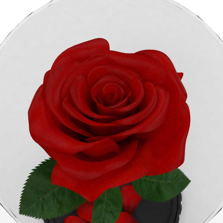 Rode roos in een kolf royalty-free 3d model - Preview no. 7