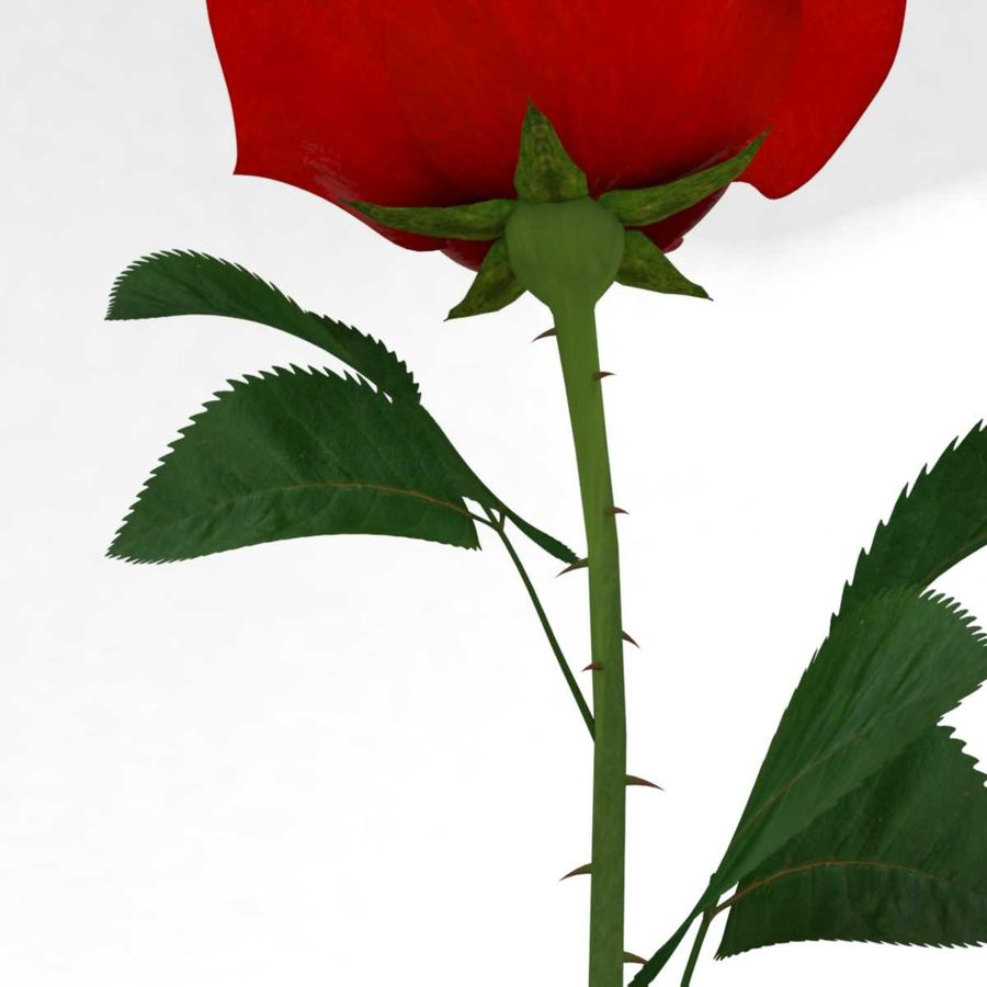 Rode roos in een kolf royalty-free 3d model - Preview no. 9