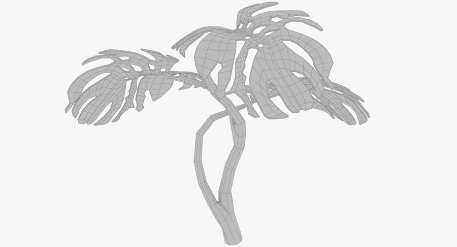 Monstera royalty-free 3d model - Preview no. 11