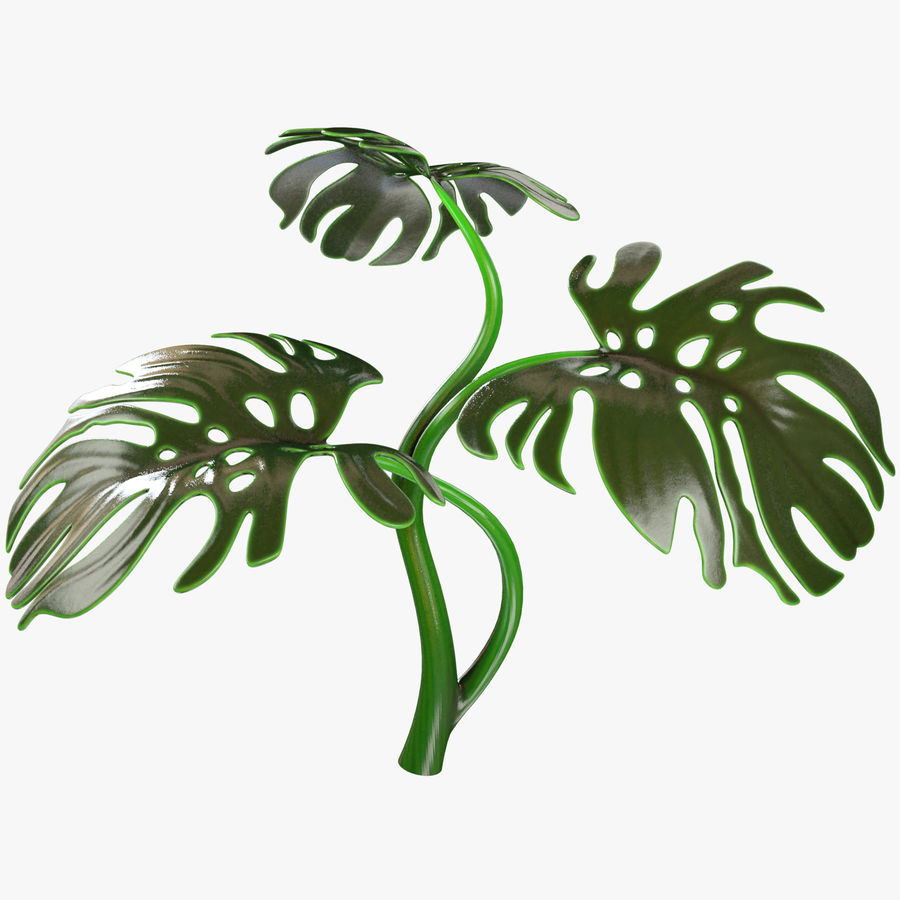 Monstera royalty-free 3d model - Preview no. 1
