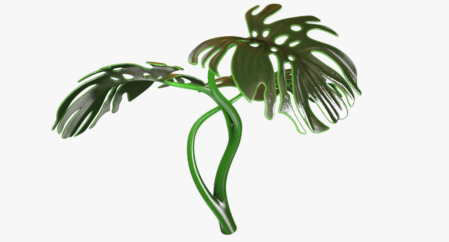 Monstera royalty-free 3d model - Preview no. 5