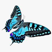 Butterfly Blue 3d model