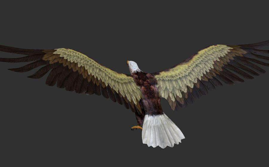 Adler royalty-free 3d model - Preview no. 5
