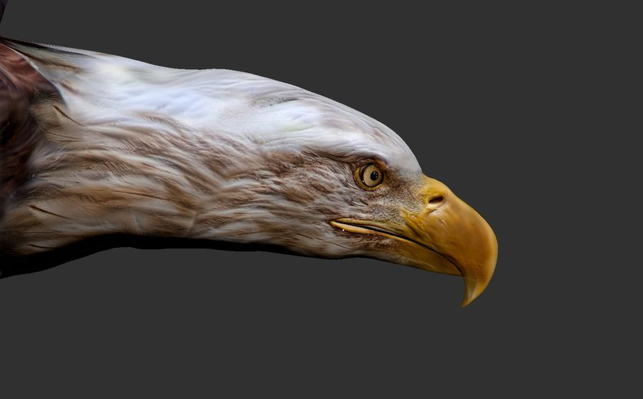 Adler royalty-free 3d model - Preview no. 10