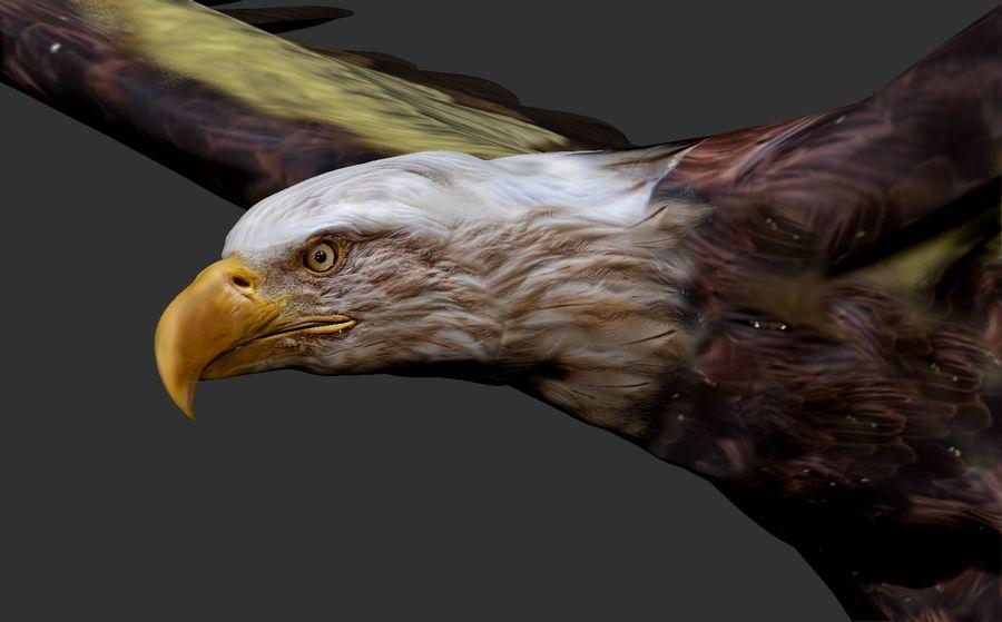 Adler royalty-free 3d model - Preview no. 1