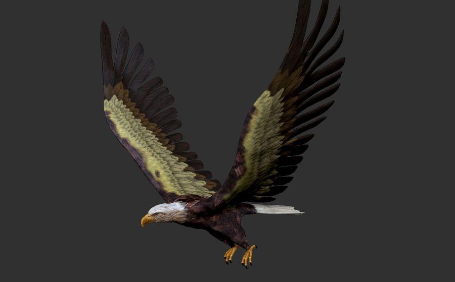 Adler royalty-free 3d model - Preview no. 7