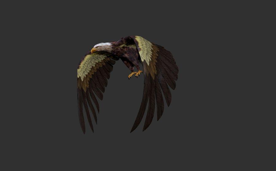 Adler royalty-free 3d model - Preview no. 6
