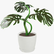 Monstera em panela 3d model