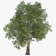Árvore de folhas secas 3d model