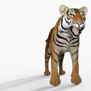 p0031 - tigre modelo 3d