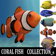 coral fish collection_s 3d model
