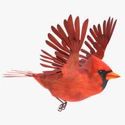 Kardinal animiert 3d model
