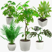 Collection of Indoor Plants 3d model
