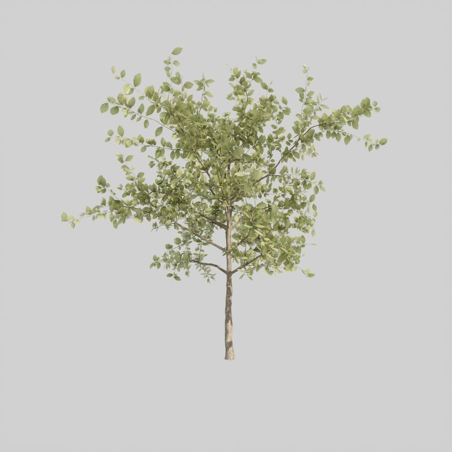Tree pack A royalty-free 3d model - Preview no. 3