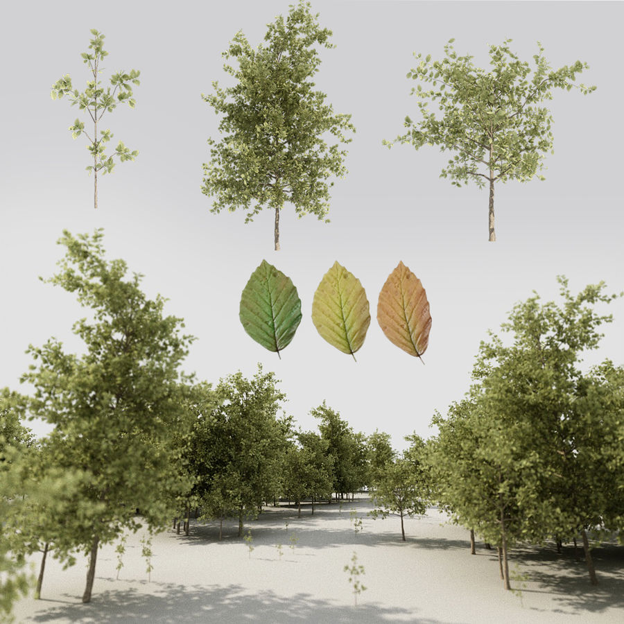 Tree pack A royalty-free 3d model - Preview no. 1