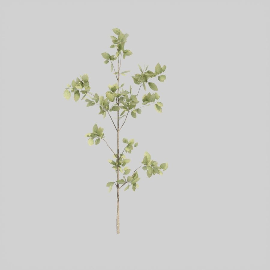 Tree pack A royalty-free 3d model - Preview no. 4