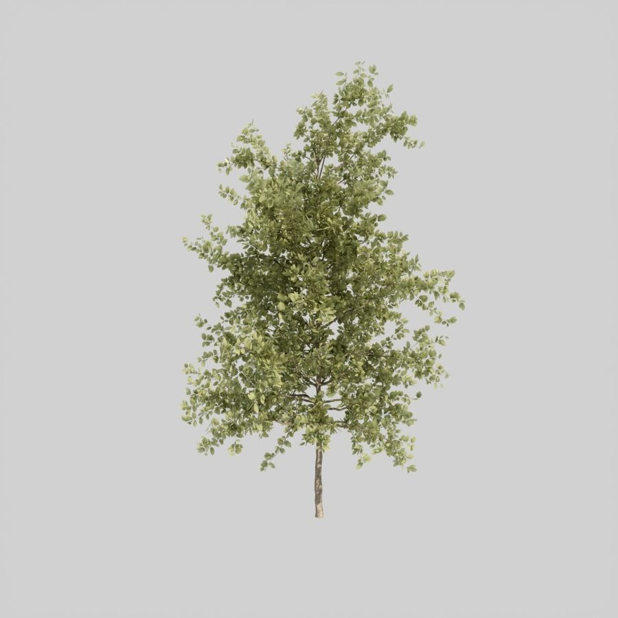 Tree pack A royalty-free 3d model - Preview no. 2