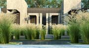 Maiden Grass 3d model