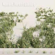 Nordycka roślina leśna C 3d model