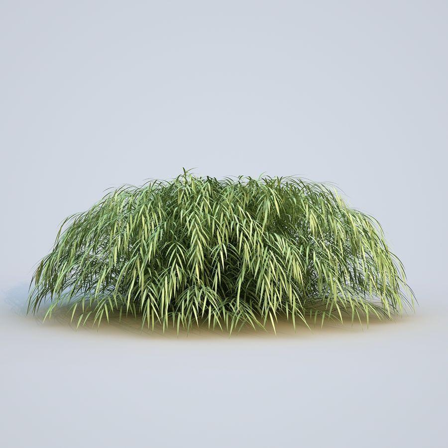 hierba del bosque japonés royalty-free modelo 3d - Preview no. 6