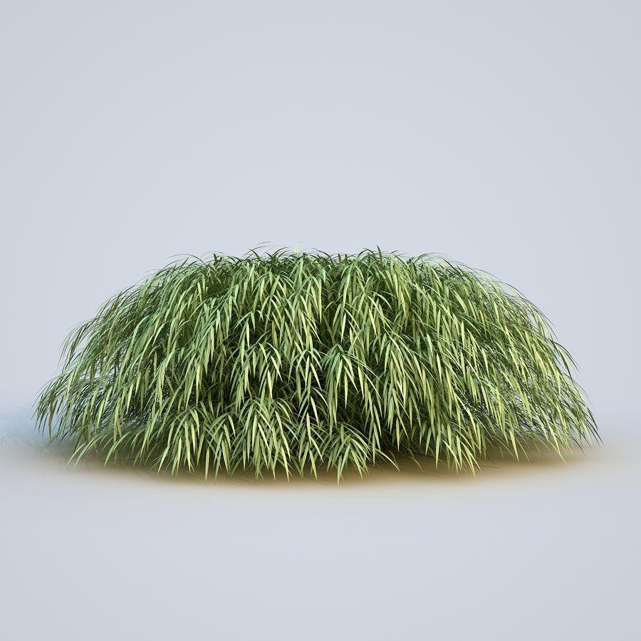 hierba del bosque japonés royalty-free modelo 3d - Preview no. 5