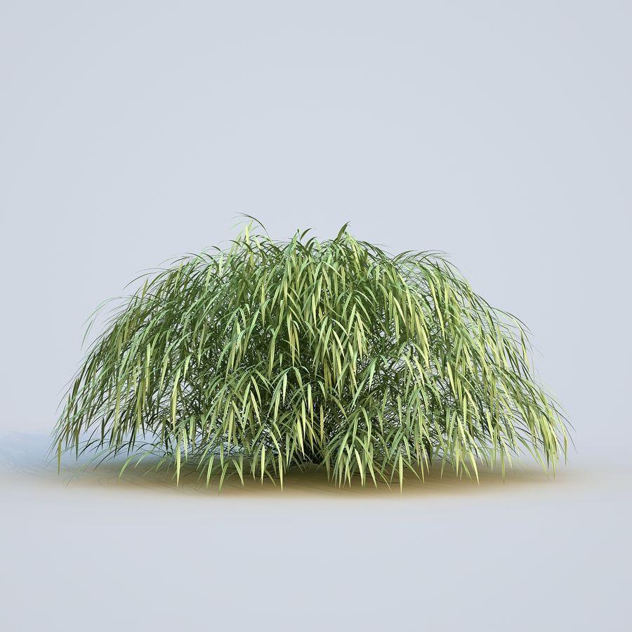 hierba del bosque japonés royalty-free modelo 3d - Preview no. 9