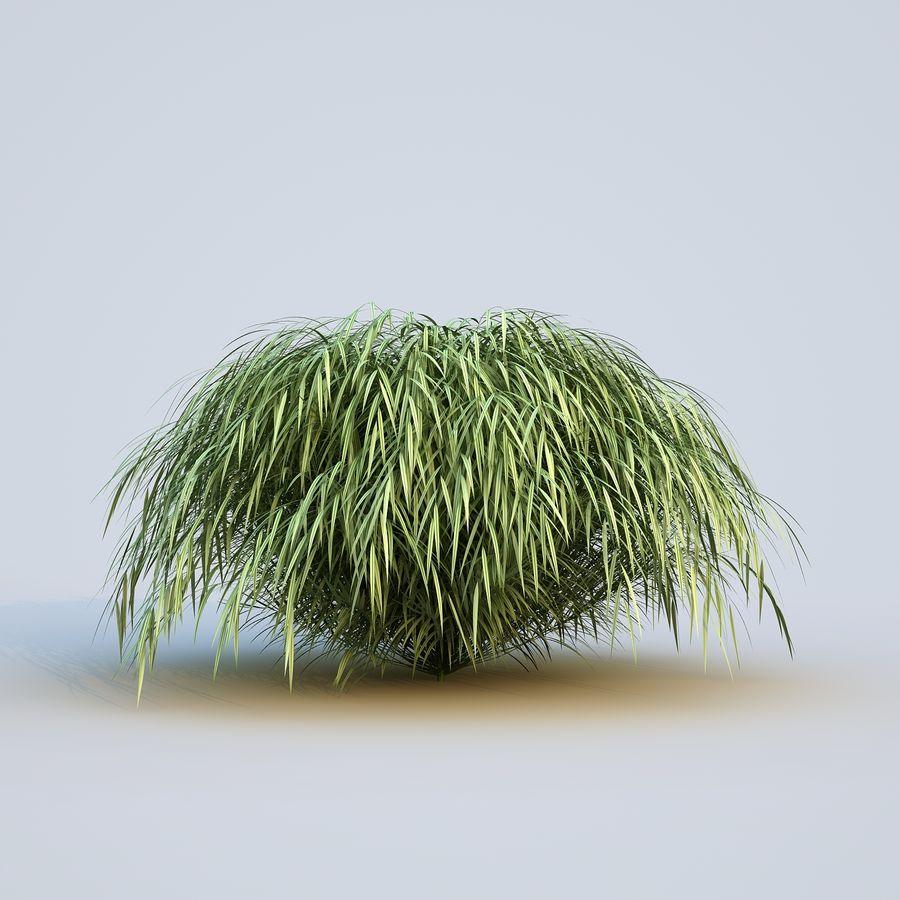 hierba del bosque japonés royalty-free modelo 3d - Preview no. 4