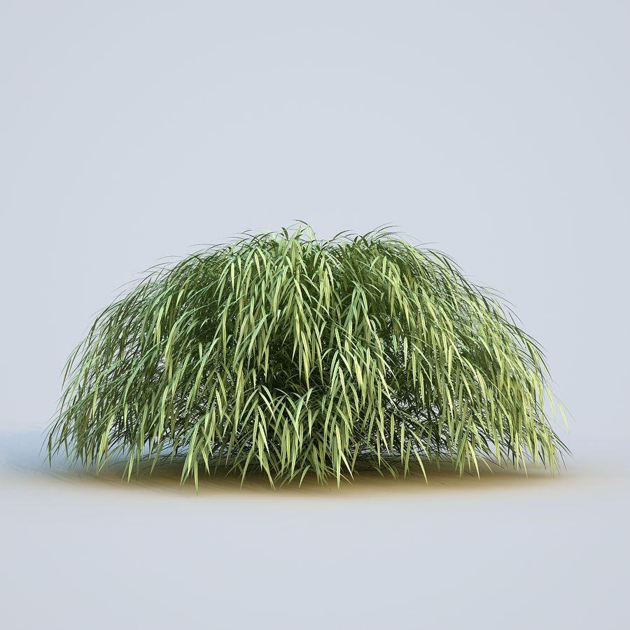 hierba del bosque japonés royalty-free modelo 3d - Preview no. 8