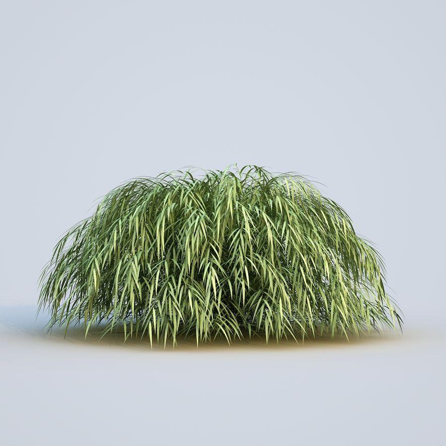 hierba del bosque japonés royalty-free modelo 3d - Preview no. 7