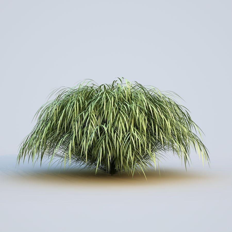 hierba del bosque japonés royalty-free modelo 3d - Preview no. 3