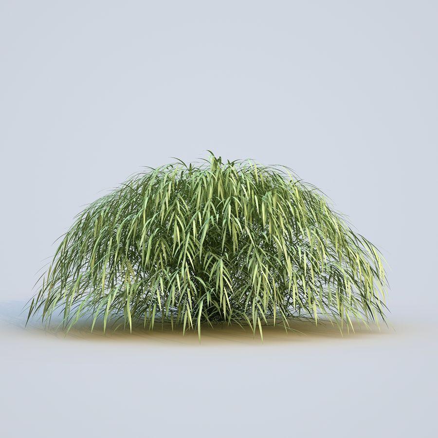 hierba del bosque japonés royalty-free modelo 3d - Preview no. 10