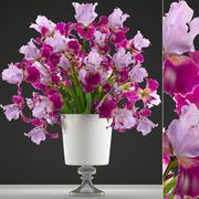 Bouquet de fleurs d'iris 3d model