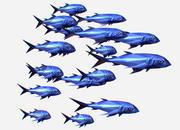 Pesci di mare blu animati a basso numero di poligoni d'arte 3d model