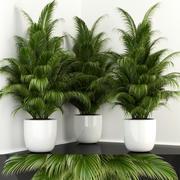 Colección de plantas 107 modelo 3d