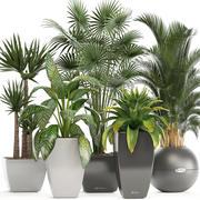 Collectie van planten in potten 3d model