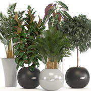 collection of plants in pots 3d model