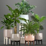 Sammlung von Pflanzen in Töpfen 3d model