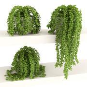 Rośliny 3 3d model